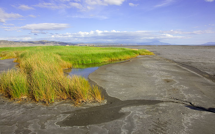 Lake Natron is very shallow, with a maximum depth of around 1 meter - most of the lake is in fact wet sediment filling up the depression. (Photo: Tom Pfeiffer)