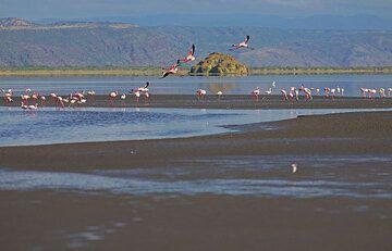 Flamingoes at Lake Natron. (Photo: Tom Pfeiffer)