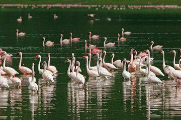 Flamingos at Lake Empakai, in the Ngorongoro Highlands, Tanzania (Photo: Tom Pfeiffer)