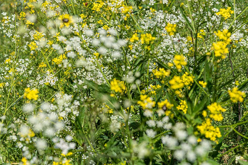 White and yellow flowers (Photo: Tom Pfeiffer)