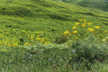 Yellow flowers and green meadows (Photo: Tom Pfeiffer)
