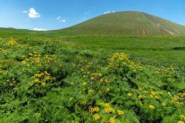 Yellow flowers and Armaghan (Photo: Tom Pfeiffer)