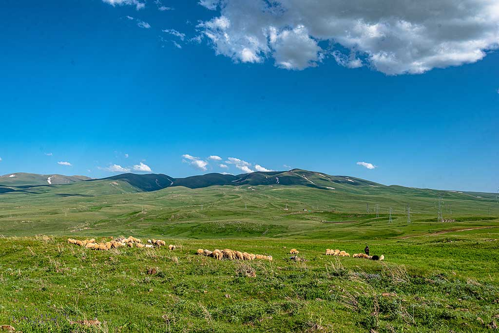 On the way back, we meet a shepherd with its herd of sheep. (Photo: Tom Pfeiffer)