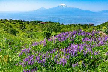 Slowly climbing the foothills of Aragats volcano, we can see Ararat towards the south on the horizon in approx. 50 km distance. (Photo: Tom Pfeiffer)