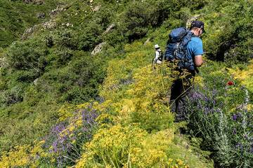 Late May and June show an explosion of spring colors in the mountains. (Photo: Tom Pfeiffer)