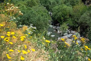 Flowers at the river bank (Photo: Tom Pfeiffer)