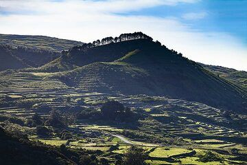 View from the Arbol Garoe area to younger cinder cones on El Hierro island. (Photo: Tobias Schorr)
