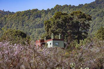 A house between almond trees at El Pinar on El Hierro island. (Photo: Tobias Schorr)