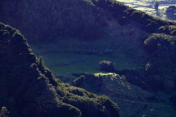 A green meadow in a volcano crater on El Hierro island. (Photo: Tobias Schorr)