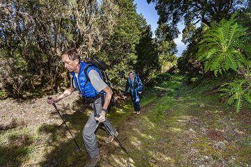 David hiking on the beautiful forest path to the Tanganasoga volcano on El Hierro island. (Photo: Tobias Schorr)