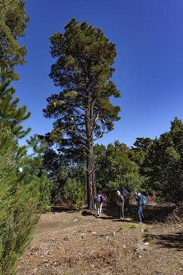 The group watching the huge trees on El Hierro island. (Photo: Tobias Schorr)