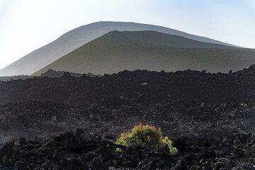 The caldera Blanca craters on Lanzarote. (Photo: Tobias Schorr)