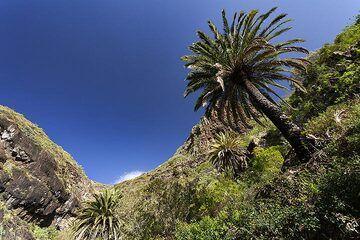 Palm trees at the Masca valley on Tenerife island. (Photo: Tobias Schorr)