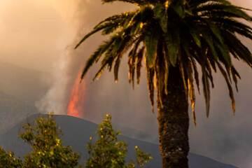 Lava fountain behind a palm tree (Photo: Tom Pfeiffer)
