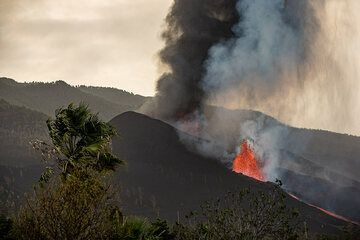 View of the eruption with a palm in the foreground. (Photo: Tom Pfeiffer)