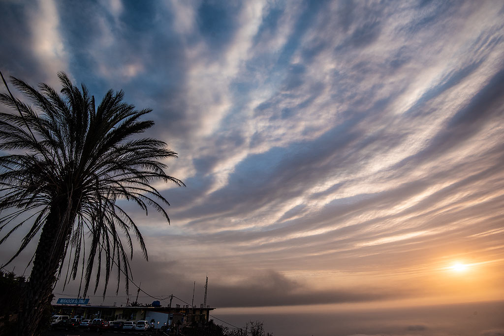 A palm against the evening sky with concentric rings of the eruption cloud. (Photo: Tom Pfeiffer)