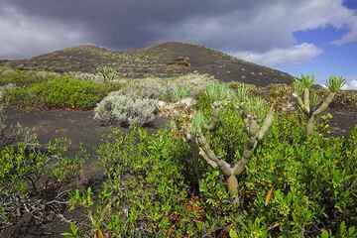 South rift zone landscape, El Hierro Island (Canary Islands) (Photo: Tom Pfeiffer)