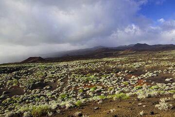 The semi-desert southern rift zone (Photo: Tom Pfeiffer)