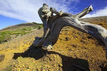 el-hierro_i50366.jpg (Photo: Tom Pfeiffer)