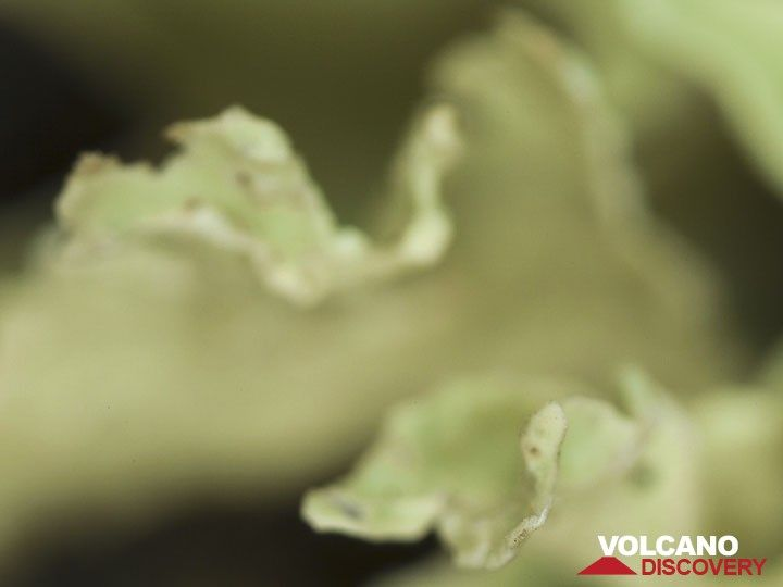 A lichen on a lava rock  (Photo: Tobias Schorr)