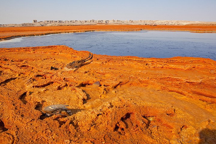Many dead birds are found near the black lake at Dallol, a small explosion crater west of the main complex of Dallol, and thought to have been created during the last known eruption in 1926. THe crater lake has a dark surface and is saturated with salt and probably contains many other anorganic and organic substances, as it smells badly hydrocarons. Perhaps these birds are attracted by the water and confused in the heat, taste the toxic solution and then soon after die near the spot. (Photo: Tom Pfeiffer)