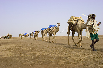 One by one, loaded caravans cross the salt lake back towards Ahmed Ela.   (Photo: Tom Pfeiffer)