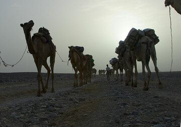 Caravans arriving, others leaving. (Photo: Tom Pfeiffer)