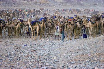 Am Abend und in der Nacht kommen Hunderte bis Tausende Kamele nach Ahmed Ela am Rand des Salzsees, wo sich ein jahrundertealtes Ritual abspielt. (Photo: Tom Pfeiffer)