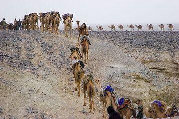 """Die Zahl der Kamele in jeder Kravane und die Namen aller sich zur Arbeit bereitstellenden Salzbrecher wurden genau aufgezeichnet und einander über ein Losverfahren zugewiesen, wobei je genau 3 Arbeiter pro Karavane zur Verfügung gestellt werden. Damit wird eine Idealgröße der Kravanen von 10-20 Kamelen erzwungen. Wenn es zu wenig Arbeiter oder zu wenig Karavanen gibt, erhalten die zurückbleibenden am folgenden Tag Priorität in der Verteilung, die vom Shumbahari (""""Herrscher des Sees"""") genauestens überwacht wird. (Photo: Tom Pfeiffer)"""