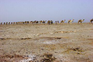 Der Marsch der Kamele führt durch eine der lebensfeindlichsten Gegenden der Erde, den endlosen Salzsee. (Photo: Tom Pfeiffer)