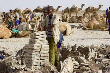 Es wird Zeit zum Verladen. Pro Kamel können 20 Salzblöcke geladen werden, für die der Kamelbesitzer je 1.50 Bir an die Salzschneider bezahlt hat.  (Photo: Tom Pfeiffer)