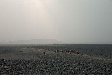 Camel caravans leaving towards the highlands in the dusty horizon. (Photo: Tom Pfeiffer)