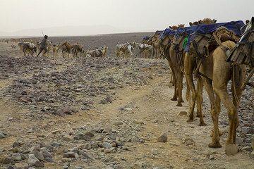 Salt caravan (Photo: Tom Pfeiffer)