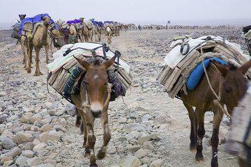 ethiopia_e37232.jpg (Photo: Tom Pfeiffer)