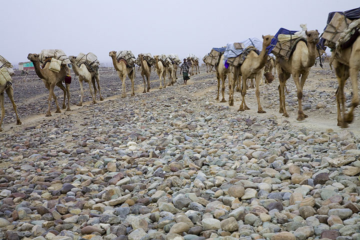 ethiopia_e37238.jpg (Photo: Tom Pfeiffer)