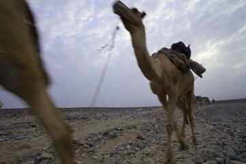 ethiopia_e37242.jpg (Photo: Tom Pfeiffer)