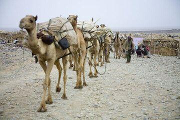 ethiopia_e37255.jpg (Photo: Tom Pfeiffer)