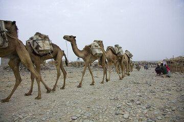 ethiopia_e37257.jpg (Photo: Tom Pfeiffer)