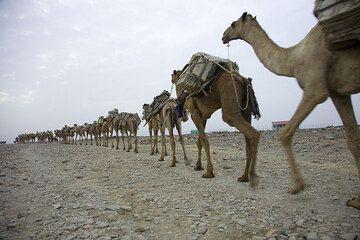 ethiopia_e37259.jpg (Photo: Tom Pfeiffer)