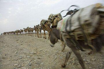 ethiopia_e37260.jpg (Photo: Tom Pfeiffer)