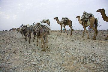 ethiopia_e37261.jpg (Photo: Tom Pfeiffer)