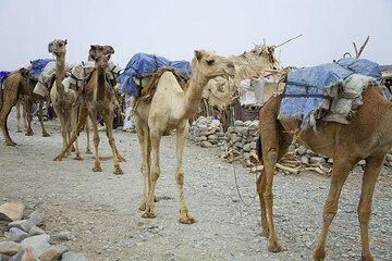 ethiopia_e37266.jpg (Photo: Tom Pfeiffer)