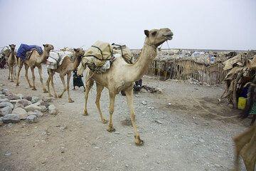 ethiopia_e37269.jpg (Photo: Tom Pfeiffer)