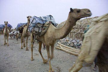 ethiopia_e37270.jpg (Photo: Tom Pfeiffer)
