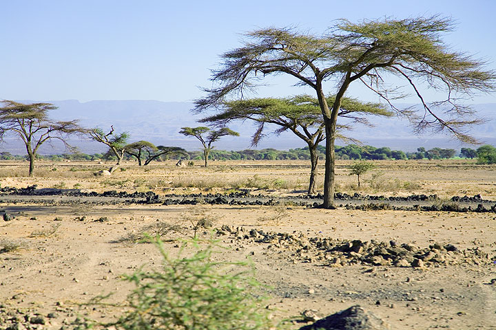 Our way leads us through dry savannah with the escarpment of the Rift valley in the background. (Photo: Tom Pfeiffer)