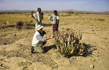 Thanks to botanist Stefan, we find all sorts of strange plants. (Photo: Tom Pfeiffer)