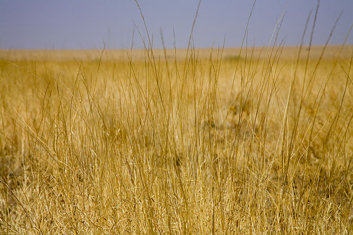 Grass steppe in the Awash National park. (Photo: Tom Pfeiffer)