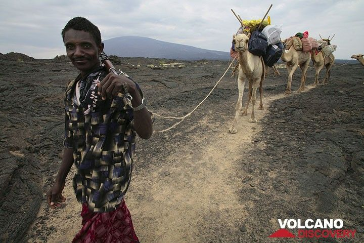 The Afar camels join us half-way up the volcano. (Photo: Tom Pfeiffer)