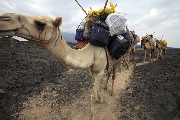 ethiopia_e36284.jpg (Photo: Tom Pfeiffer)