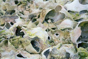 Volcán de Erta Ale (Etiopía), varios (Photo: Tom Pfeiffer)